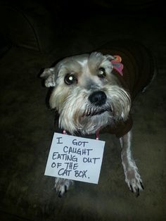 Bad bad dog!  #humor   #lol  #funnypuppies  Most funny puppies  http://buymelaughs.com/
