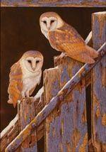Barn Owls at Duggleby Print