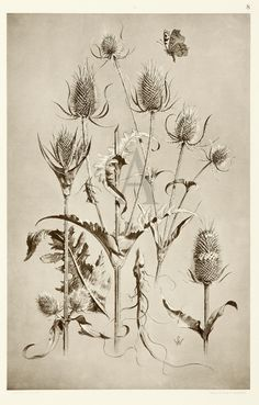 Anton Seder Botanical Drawings, Botanical Illustration, Book Illustration, Botanical Prints, Thistle Tattoo, Drawing School, Drawing Course, Plants Are Friends, Plant Drawing
