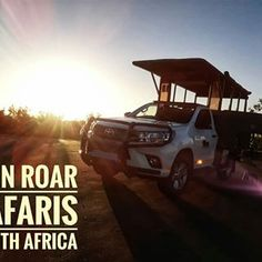 Lion Roar Safaris South Africa (@lionroarsafaris) • Instagram photos and videos. We specialize in safaris with a luxury open safari vehicle in the world renowned Kruger National Park, Home of the Big Five Animals. Big Five, Kruger National Park, Book a safari, safari in Kruger, Safari in Kruger National Park Kruger National Park, African Safari, Natural Light, South Africa, Vehicle, This Is Us, Lion, Tours, Photo And Video