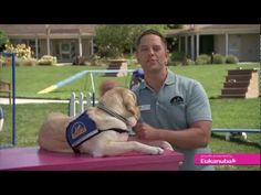 Eukanuba & Canine Companions for Independence: House Training Your Puppy