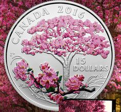 New Product Alert: Fine Silver Coloured Coin - Celebration of Spring: Cherry Blossoms
