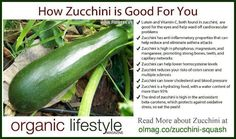 Zucchini! See what an organic lifestyle will get you :-)