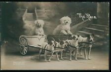 Circus Dog Bichon Frise & Jack Russell old c1910s Nelson Boston photo postcard