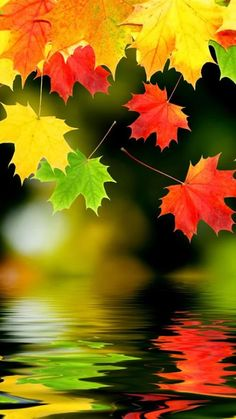 28 Breath-Taking and Most Beautiful Fall Wallpaper for Your iPhone Autumn Leaves Background, Autumn Scenes, Fall Wallpaper, Iphone Wallpaper, Wallpaper Ideas, Flower Wallpaper, Mobile Wallpaper, Wallpaper Backgrounds, All Nature