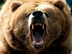 I hope I never encounter a bear. Just pounds and pounds of angry murderous fur!
