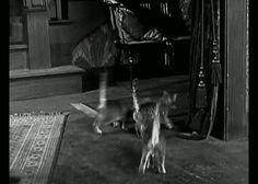 """ensalada-de-lengua-de-pajaritos:  stampede of kitties in """"Grandma's Boy"""" (1922)"""