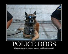 7 Police Dogs Being Totally Official