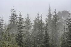 Foggy forest. Retro series. Art Print by Guido Montañés   Society6
