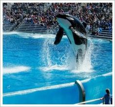Orca performs