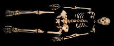 """Scientists have sequenced the oldest human DNA ever, extracted from samples of fossilised tooth and a thigh bones, found in Spain's Sima de los Huesos, which translates to """"pit of bones"""". Human Family Tree, Human Tree, Human Dna, Human Genome, Homo Heidelbergensis, Mitochondrial Dna, New Scientist, Human Evolution, Ancient Mysteries"""