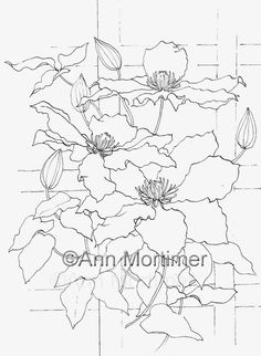 Ann Mortimer's Painting Blog: Clematis Demo drawing...YouTube demo reaches 40,000 views, let's celebrate!