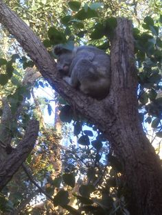Wild Life Sydney Zoo - Australia