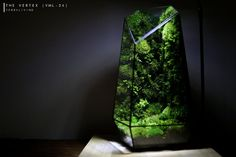 Pre-order: The Vertex ZERO L Pre-designed Completed | Etsy Rare Roses, Big Battle, Moss Terrarium, Moss Wall, Door Steps, Glass Vessel, Show Photos, Natural Disasters, Nice View