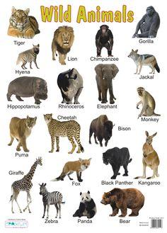 wild animals wall chart.jpg (600×838)