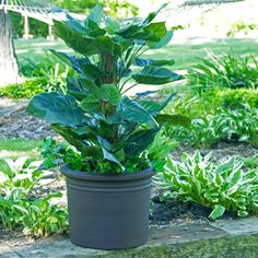 Have to have it. Round Resin Tempe Planter - $49.99 @hayneedle