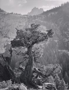 1936 Juniper Tree, Crags under Mt. Clark, Yosemite National Park by Ansel Adams Black And White Tree, Black And White Landscape, Black N White Images, Ansel Adams Photography, Fine Art Photography, Street Photography, Reflection Photography, Famous Photographers, Landscape Photographers