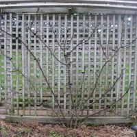 climbing roses: Training, pruning and other help Pruning Climbing Roses, Climbing Vines, Outdoor Plants, Outdoor Gardens, Rose Care, Market Garden, Rose Trees, Garden Guide, Rose Cottage