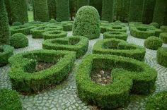 Heart shaped hedges <3