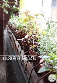 Chicken Feeder Herb Garden via Inspired By Charm. Love this! Perfect for Spring!