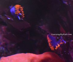 VISITING THE MONTEREY BAY AQUARIUM ----- Monterey Bay Aquarium Nudibranchs | Learning By Kids | LearningByKids.com