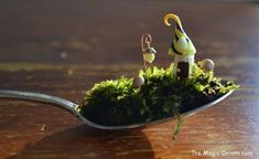 Miniature fairy garden on a teaspoon! More enchanting photos of this magical FAIRY GARDEN on The Magic Onions Blog and FairyGardens.com