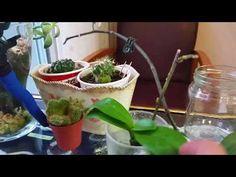 Suda orkide bakmanın faydaları - YouTube