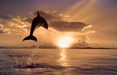 Un delfín saltando al atardecer.