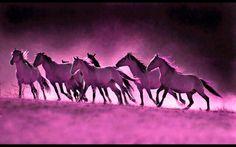 Horse Training | Plexus Guruz