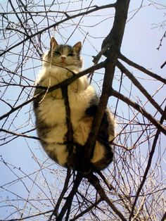 {hanging on a limb} that is one balanced cat!