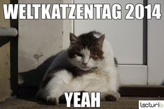 Heute ist Weltkatzentag! Take A Break, Cats, Animals, Gatos, Animales, Kitty Cats, Animaux, Animal Memes, Cat Breeds