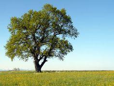 bäume bilder   Freistehender Baum