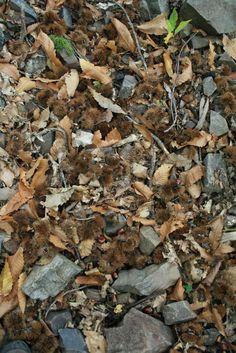 Muntanyes de Prades Vinyes en Altitud  www.caranordceller.com