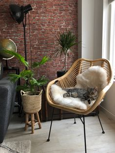 Image uploaded by Find images and videos about style, inspiration and home on We Heart It - the app to get lost in what you love. Grey Interior Doors, Cafe Interior, Interior Design, Balinese Decor, Dining Room Paint, Home Salon, Minimalist Home Interior, Interior Inspiration, Decoration
