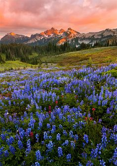 Photograph Washington State by Henrik Anker Bjerregaard  Lundh III on 500px