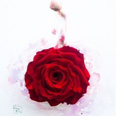 Rouge II, made of a preserved red rose . #instaartmovement