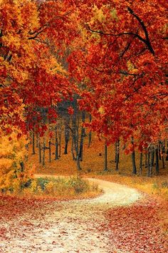 6792 Autumn Driveway Orange Leaves Background Printed Backdrop