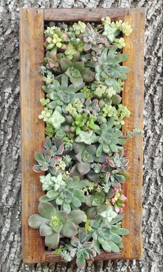 Succulent Vertical Wall Garden. This would tie the kitchen and living home together.