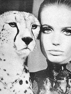 Cheetah and Veruschka