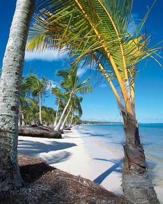 Photo about Beach, Punta Cana, Dominican Republic. Image of punta, cana, palms - 2999969 Island Beach, Travel Information, Dominican Republic, Thailand Travel, Vacation Spots, Beautiful Beaches, Caribbean, National Parks, Places To Visit