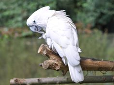 Bird, Parrots, Birds, Animales, Parrot, Birdwatching, Parakeets