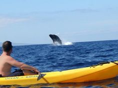 Wanitamalas : Kayak Tours In Maui. Helicopter tours are among the most well-known activities in Hawaii, and for such a very good reason! You may go ka...