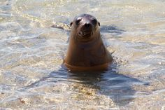 5-day Galapagos island hopping itinerary with interesting day trips and hotel accommodations. Positiv Turismo, Quito.