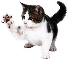 Cosas que hay que saber de los gatos / Things you need to know about cats