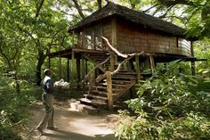 Ten of The Worlds Most Beautiful Tree House Restaurants Volcano National Park, National Parks, Keemala Phuket, Tree House Resort, Beautiful Tree Houses, Blue Forest, Sleeping Under The Stars, House Restaurant, Treehouse