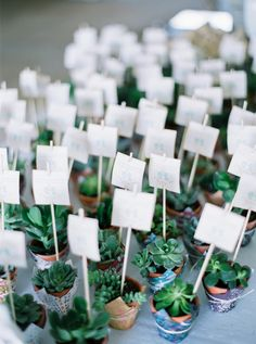 marque place succulente