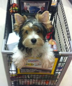 Cute puppy I saw at Ralphs ...Had to share this picture with you...so cute
