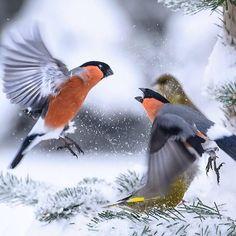 Little birdies having fun in the snow