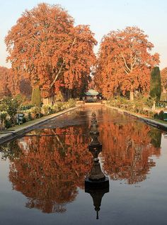 Leaves of a chinar tree, in autumn, in the famous Mughal Garden of Shalimar in Srinagar.   (Image from Flickr).
