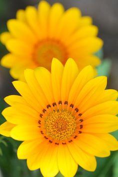"""Yellow mood"" by Vincent Cecchetti"